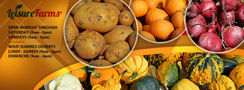 Banner of various root vegetables, pumpkins and squash